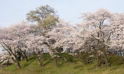桜2004